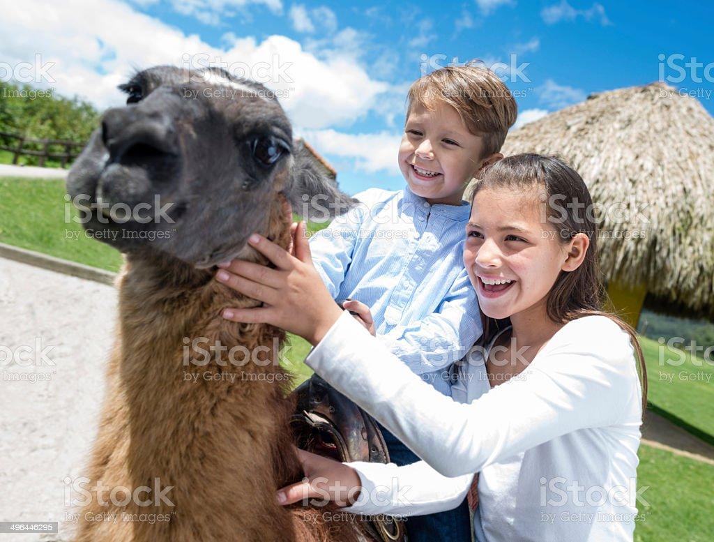 Kids riding a llama royalty-free stock photo
