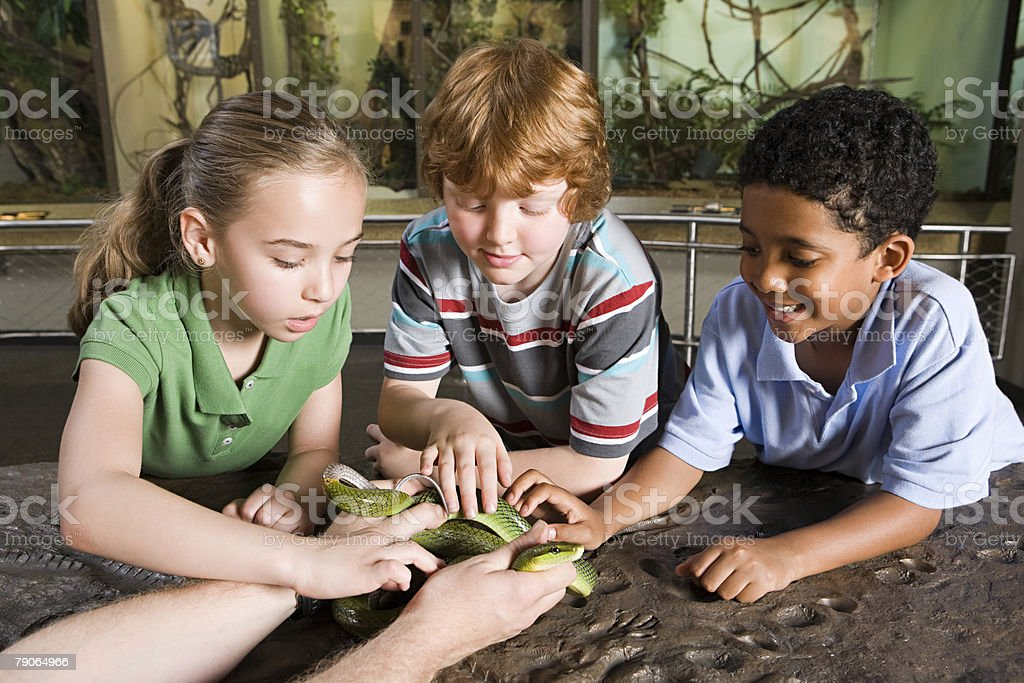 Kids touching snake stock photo
