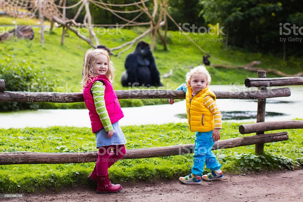 Kids watching animals at in safari park stock photo