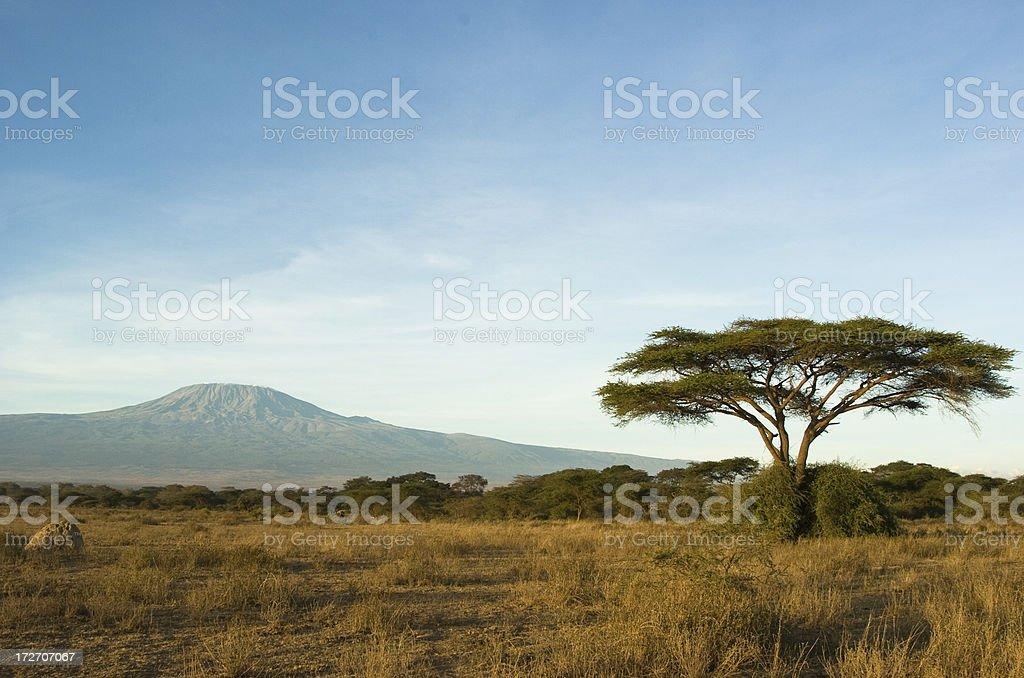 Kilimanjaro stock photo