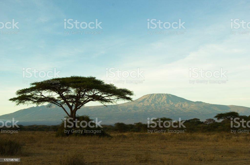 Kilimanjaro with tree stock photo