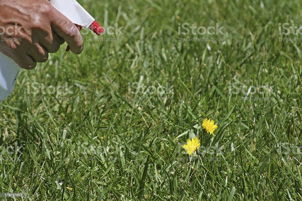 Kill Weeds stock photo
