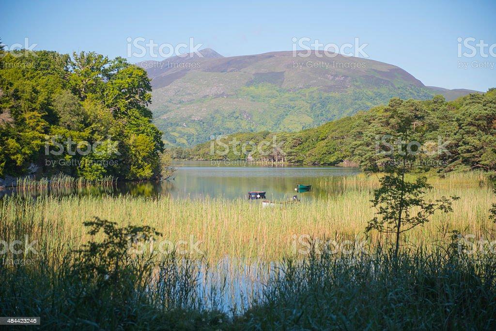 Killarney National Park, Killarney, Ireland. stock photo