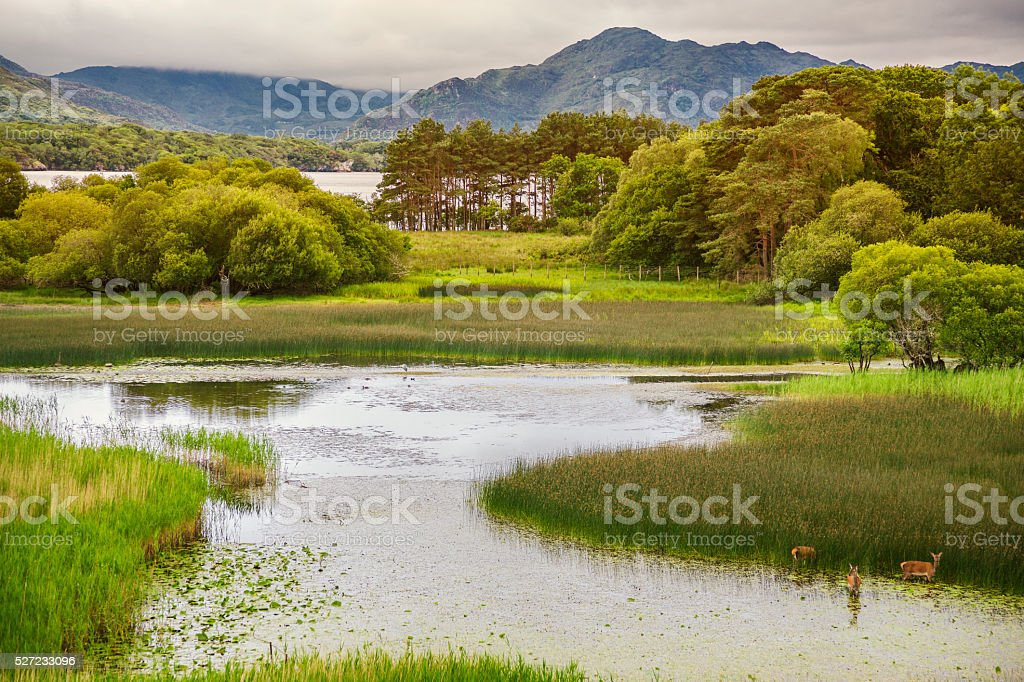 Killarney National Park Scenic stock photo