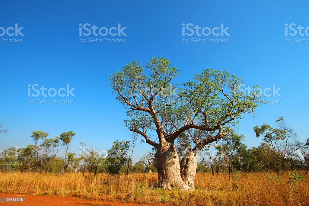 Kimberley, Western Australia stock photo