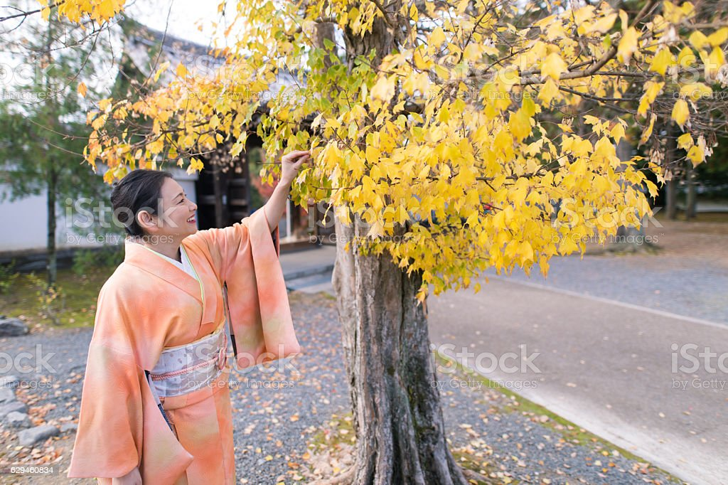 Kimono woman looking at Gingyo tree in temple stock photo