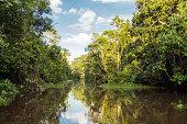 Kinabatangan river, rainforest
