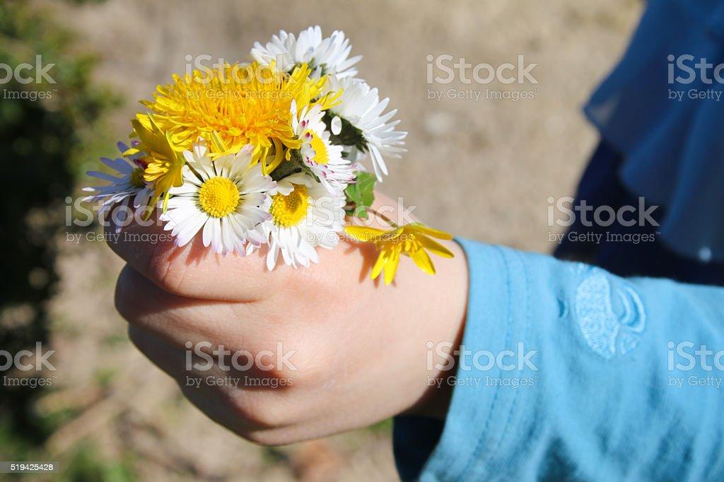 Kinderhand mit Wiesenblumenstrauß stock photo