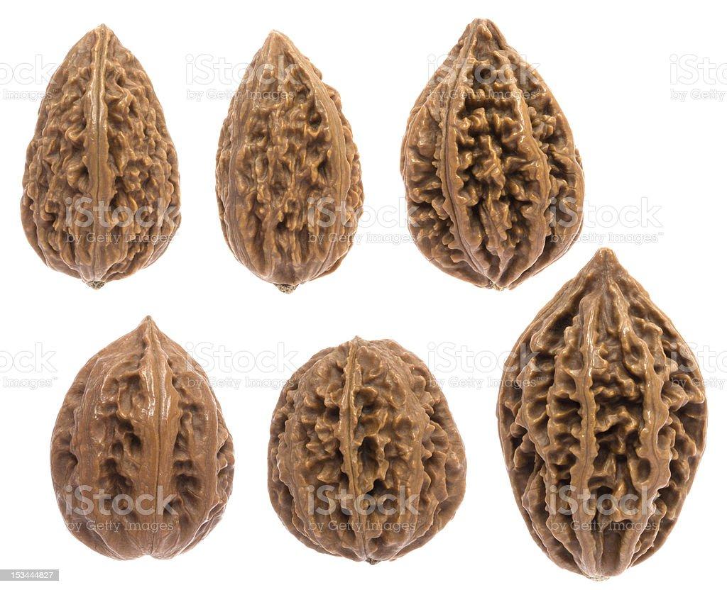 kinds of walnuts stock photo