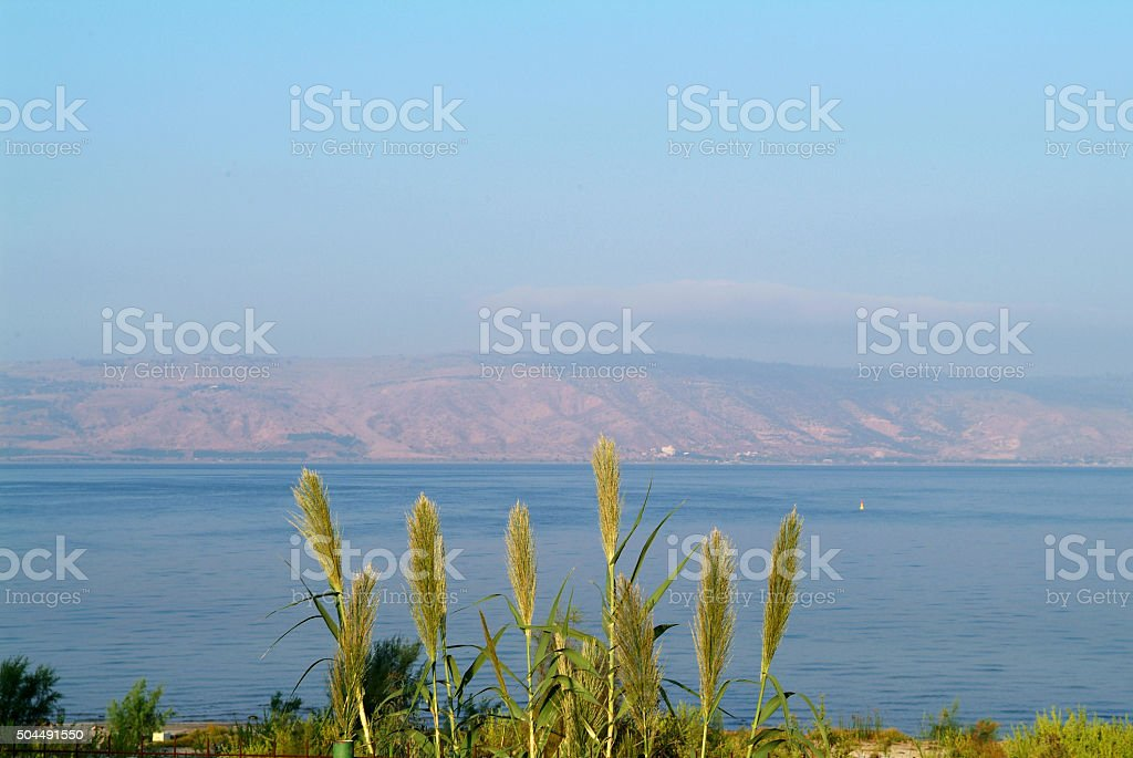 Kineret lake shore stock photo