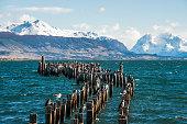 King Cormorant colony, Puerto Natales, Chile