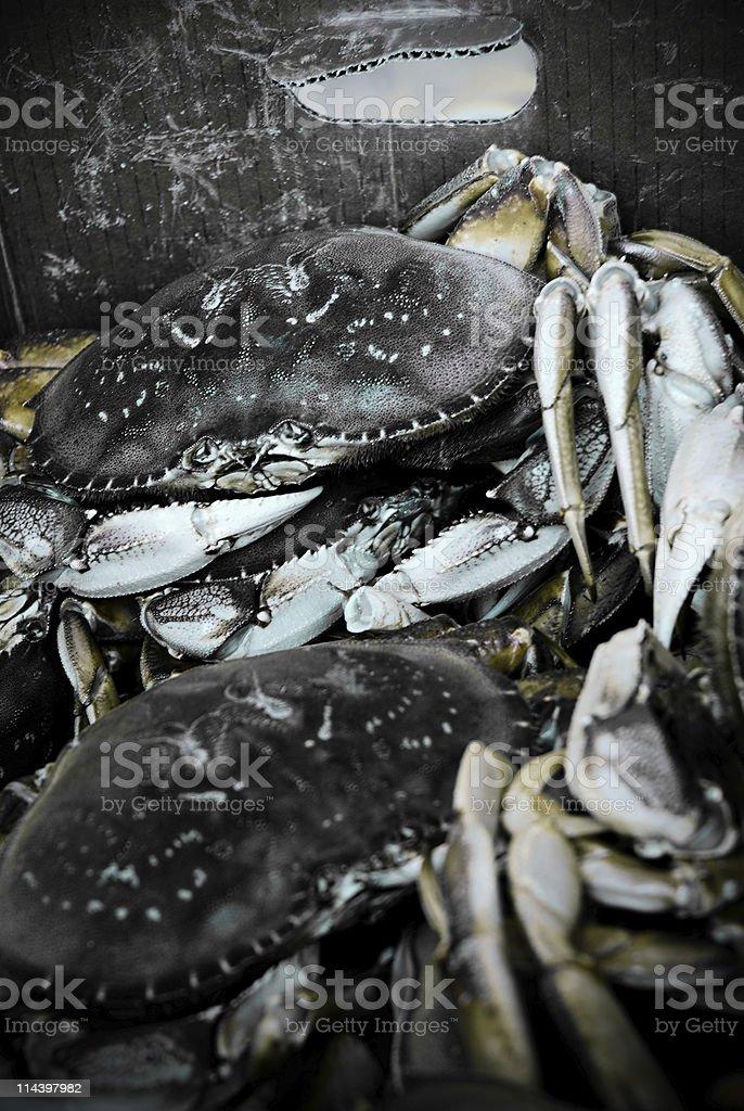 king Crabs stock photo