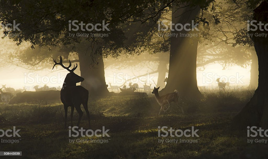 King of  the forest stock photo