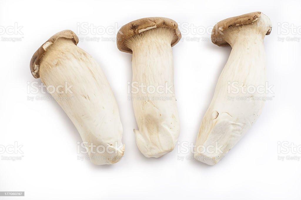 King Oyster Mushroom royalty-free stock photo