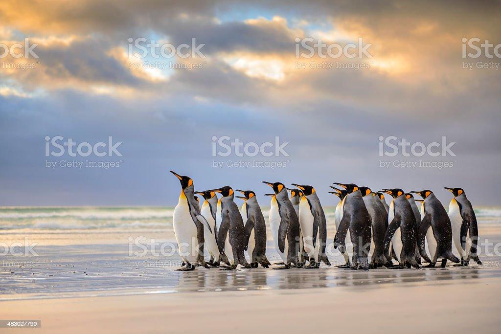 King Penguins on the Beach stock photo