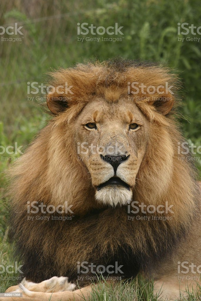 King royalty-free stock photo