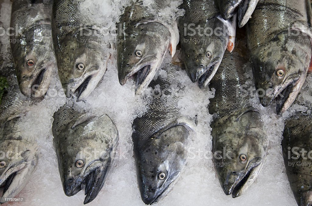 King salmon lined up on ice royalty-free stock photo