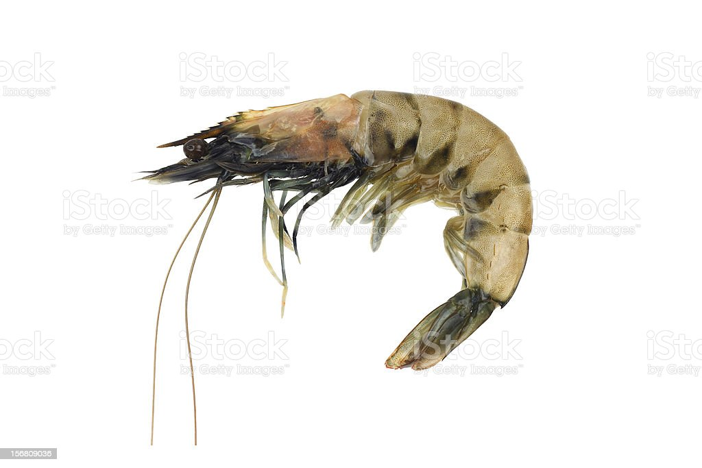 King shrimp stock photo