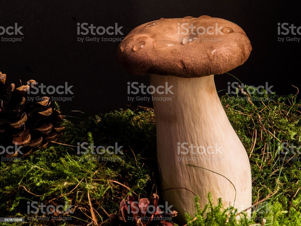 King trumpet mushroom and moss stock photo