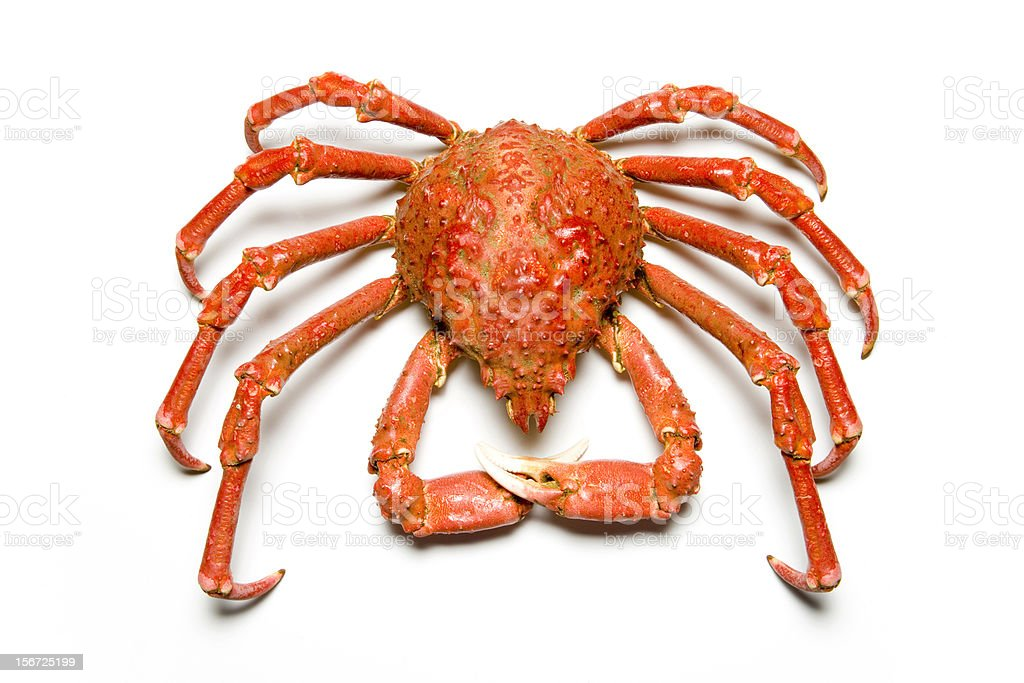 Kingcrab royalty-free stock photo