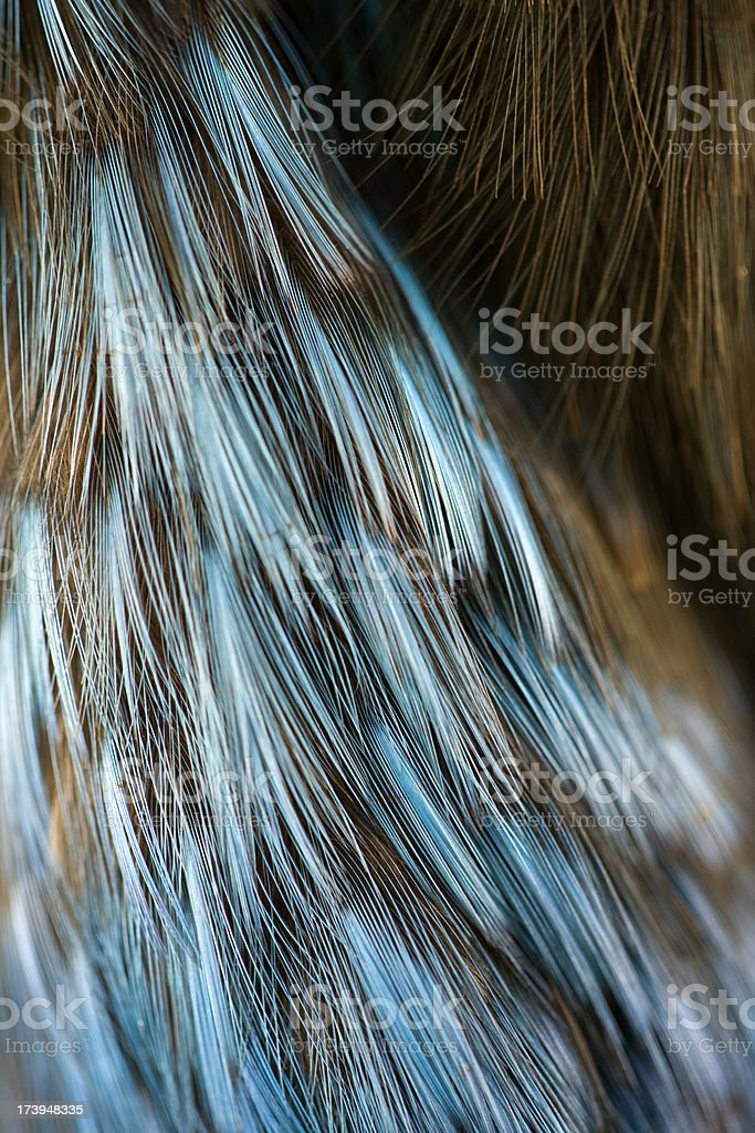 kingfisher feather royalty-free stock photo