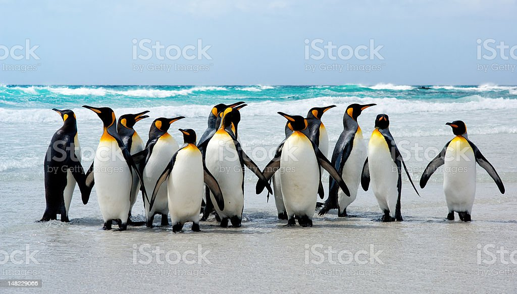 Kings of the Beach stock photo