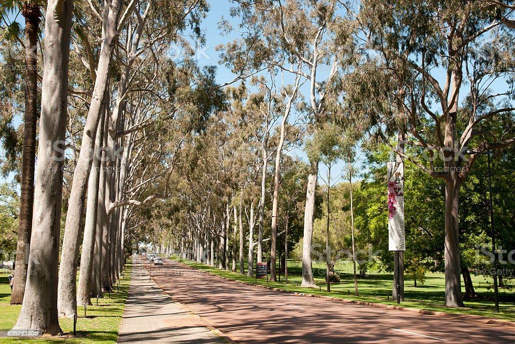Kings Park Eucalyptus Road - Perth - Australia stock photo