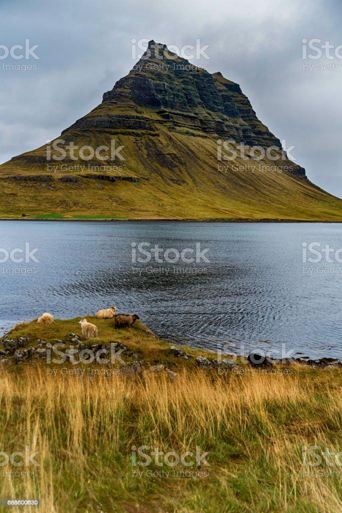 Kirkjufell in Iceland stock photo