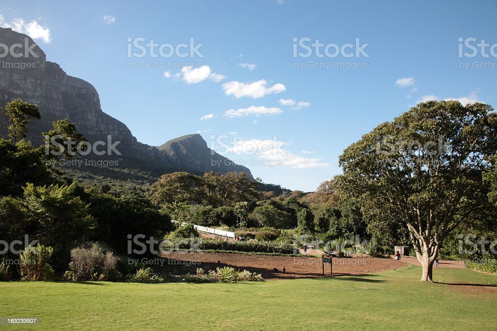 Kirstenbosch Botanic Gardens in Cape Town stock photo