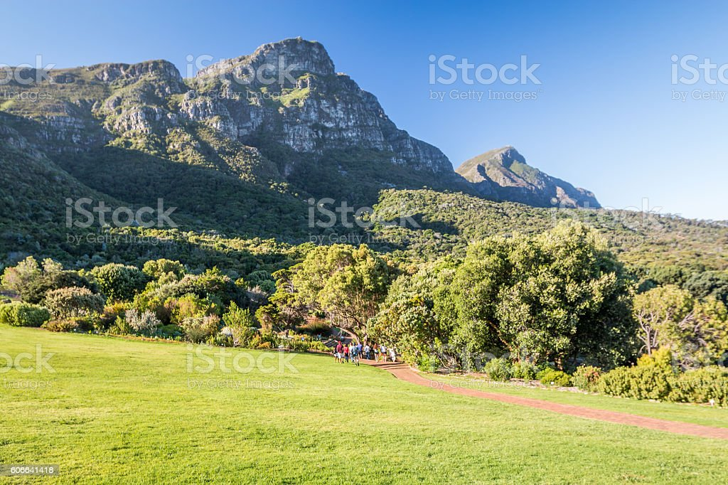 Kirstenbosch Botanical garden in Cape Town stock photo