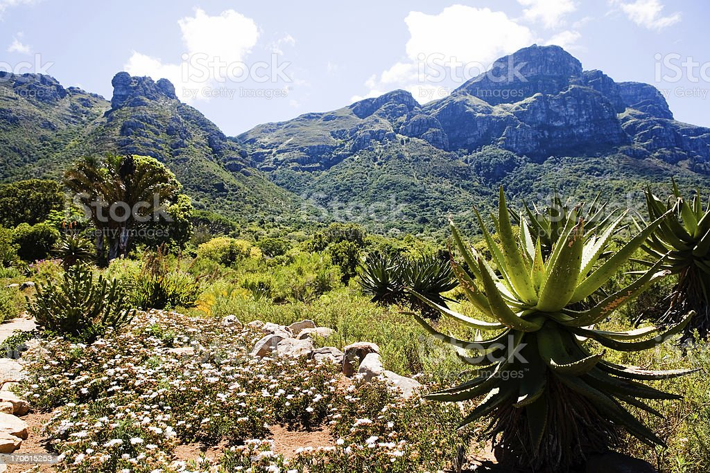 Kirstenbosch Botanical Garden stock photo