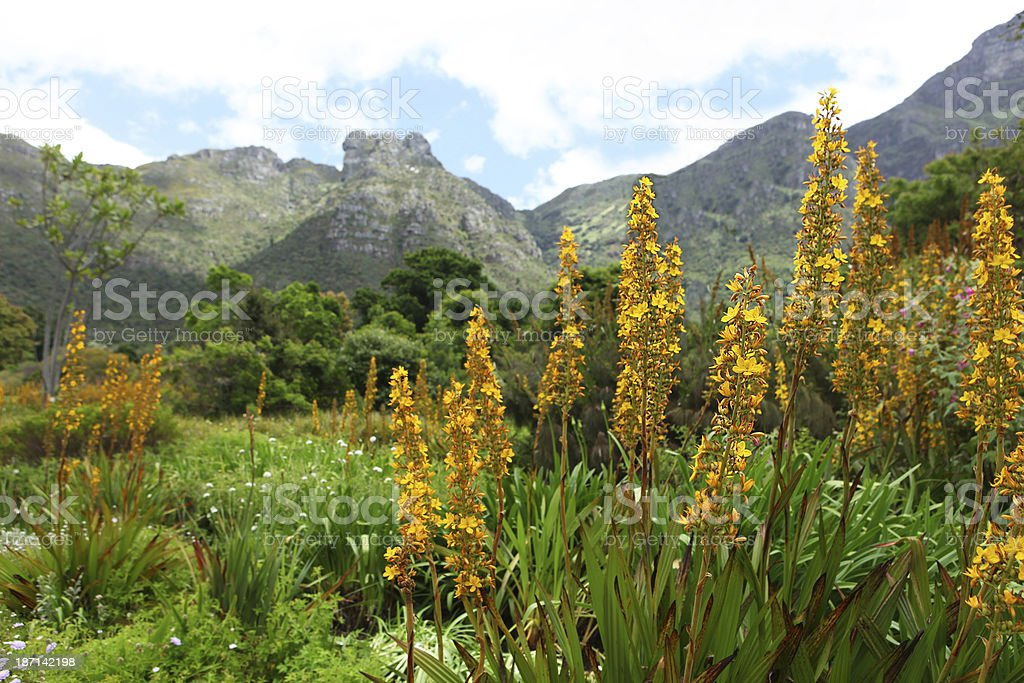 Kirstenbosch Botanical Gardens, Cape Town stock photo