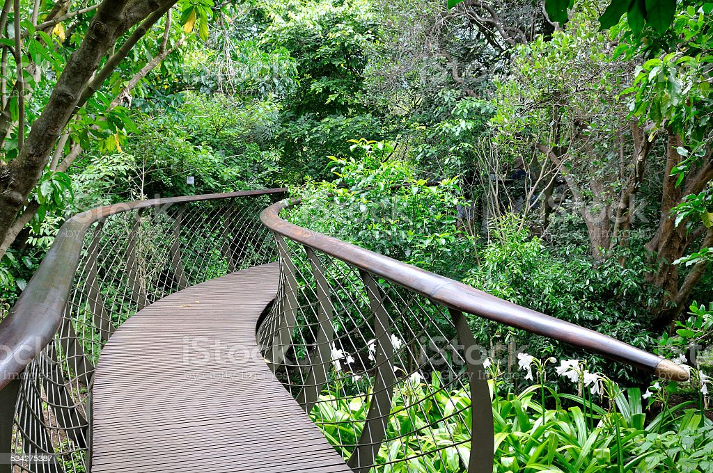 Kirstenbosch Tree Canopy Walkway, the Boomslang stock photo