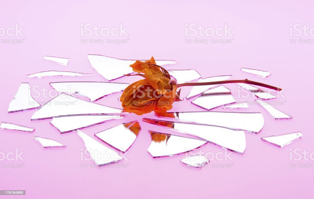 Kiss by a Wilted Rose is Shattered Love royalty-free stock photo