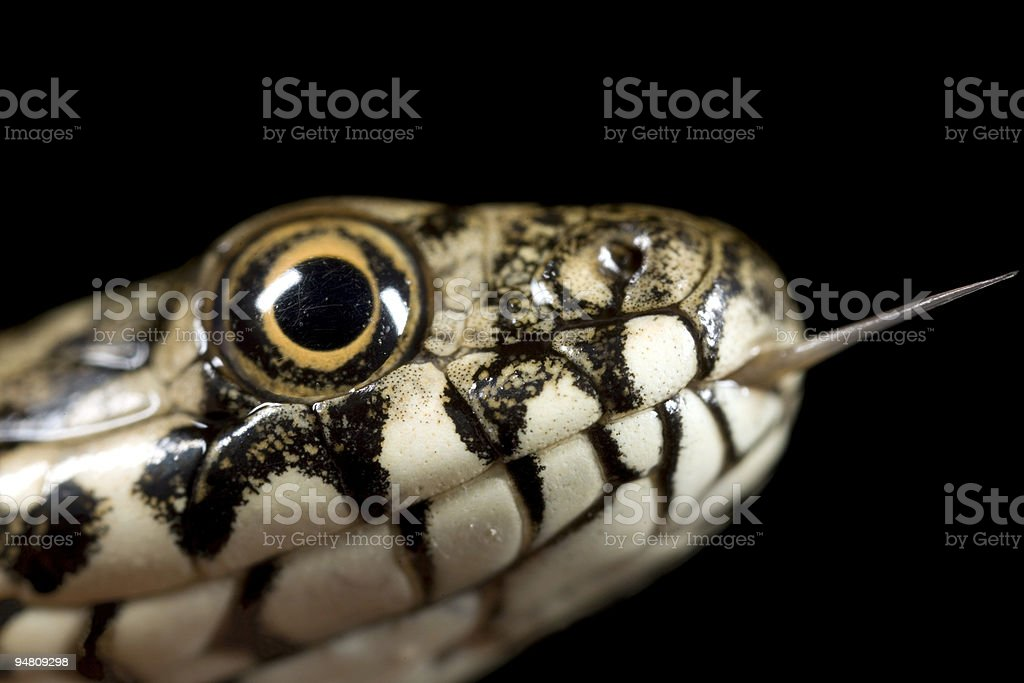 kiss me - the snake stock photo