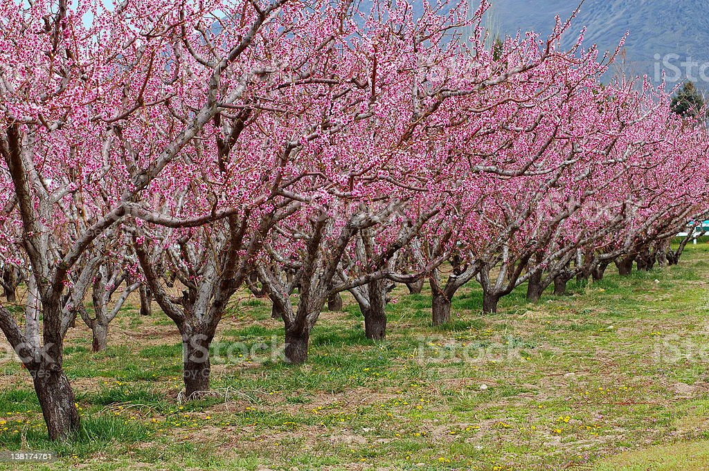 Kiss of Spring royalty-free stock photo