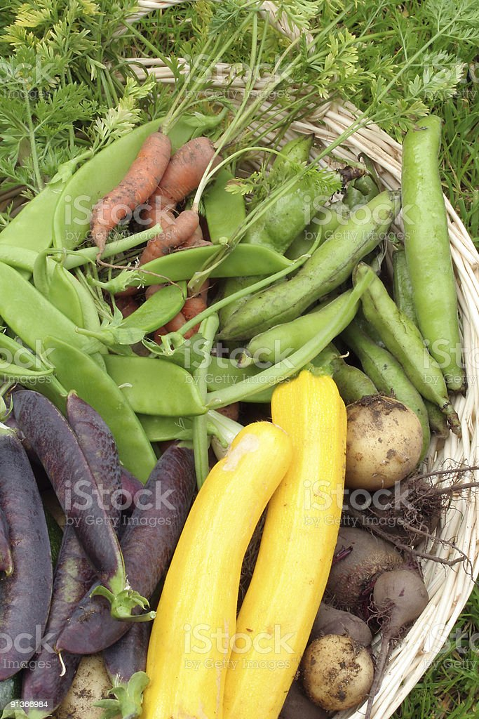 kitchen garden harvest royalty-free stock photo