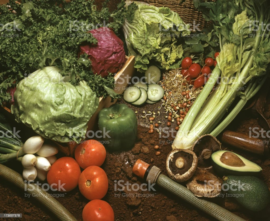 Kitchen garden with fresh vegetables royalty-free stock photo