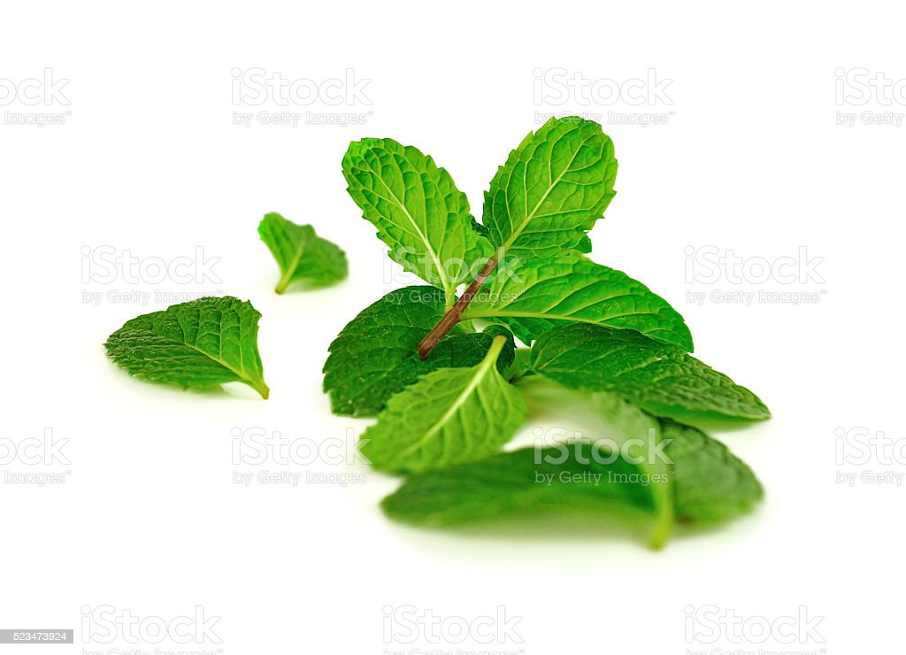Kitchen mint leaf isolated on white stock photo