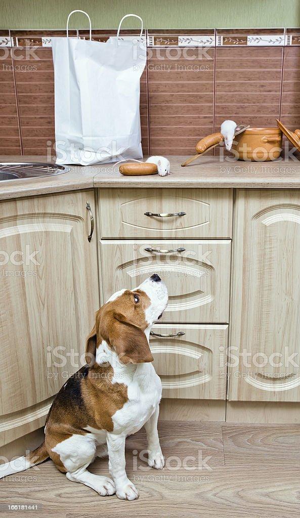 Kitchen pilferers royalty-free stock photo