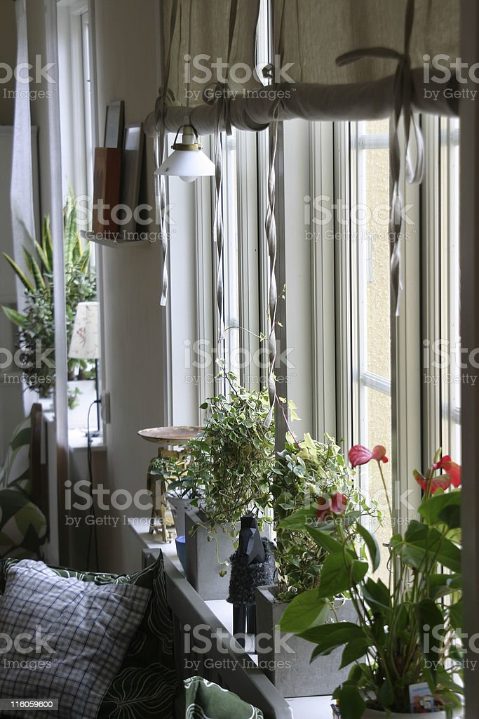 Kitchen window royalty-free stock photo