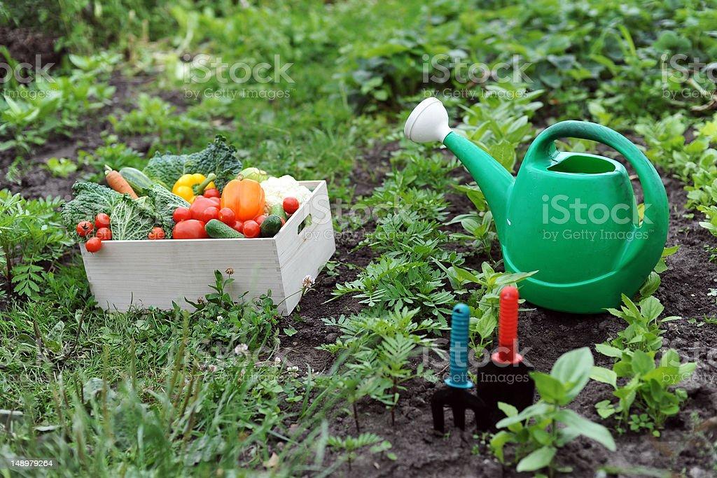 Kitchen-garden royalty-free stock photo