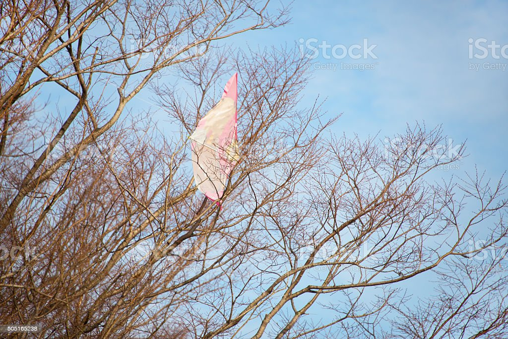 Kite Hanging on a Tree stock photo