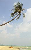Kite under palm tree.