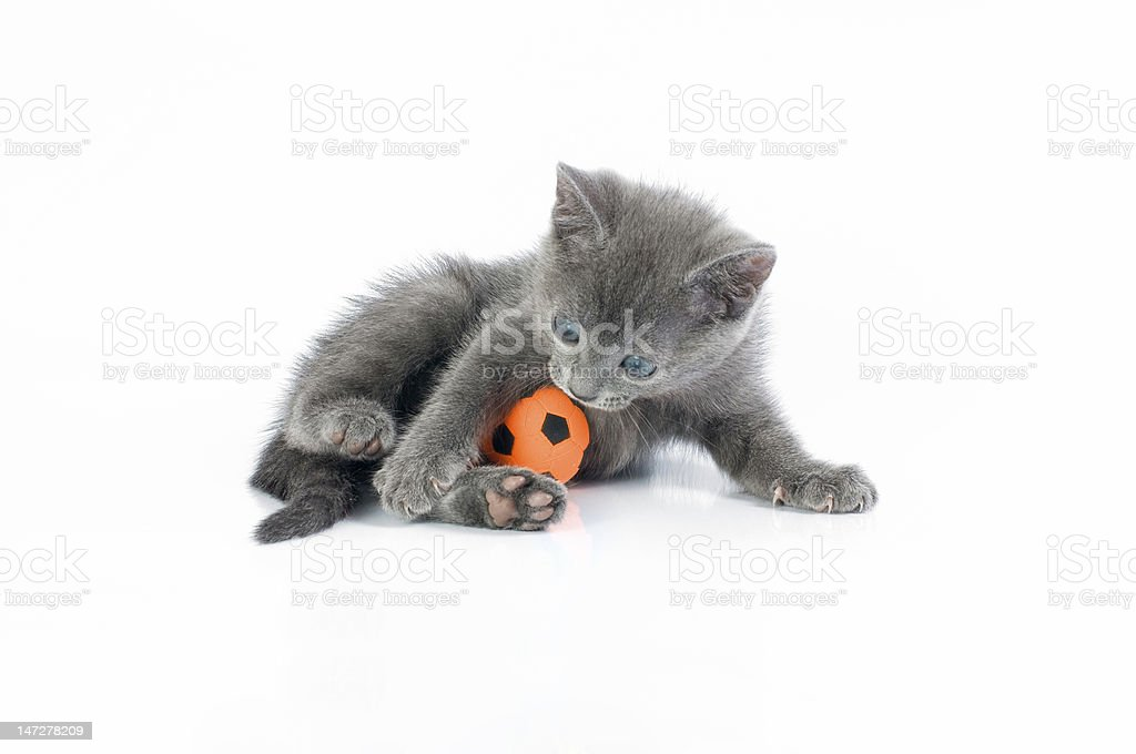 kitte royalty-free stock photo