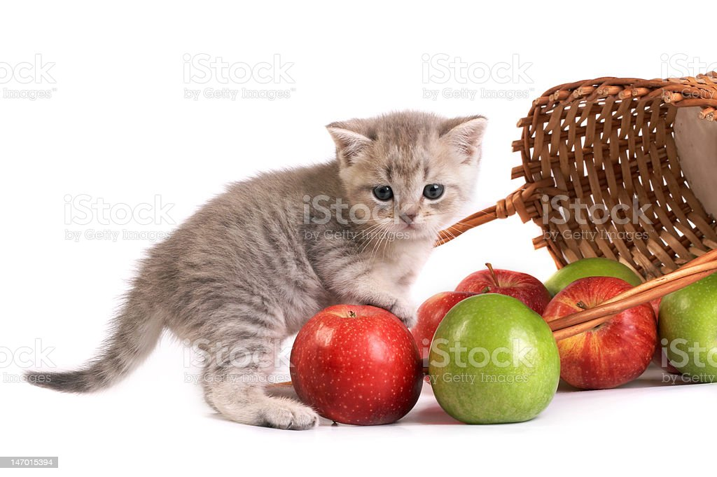 Kitten and a basket with apples royalty-free stock photo