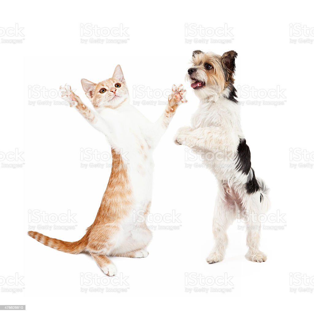 Kitten and Dog Dancing Together stock photo