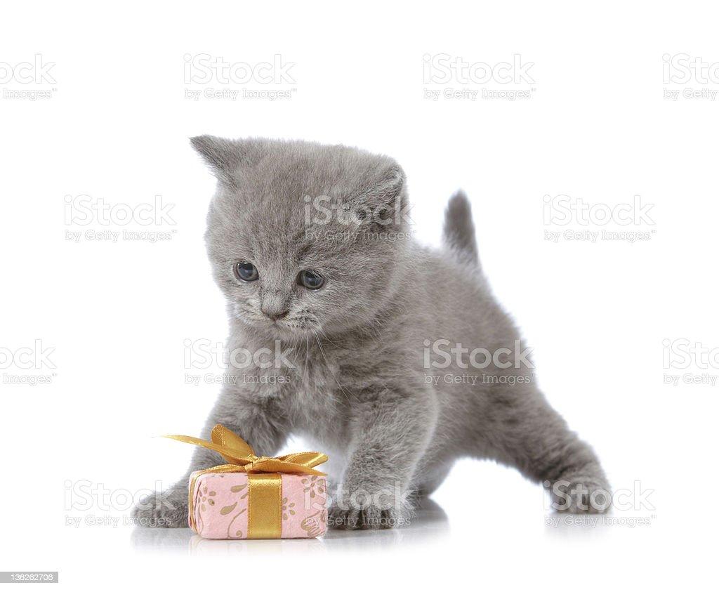 kitten and gift box royalty-free stock photo