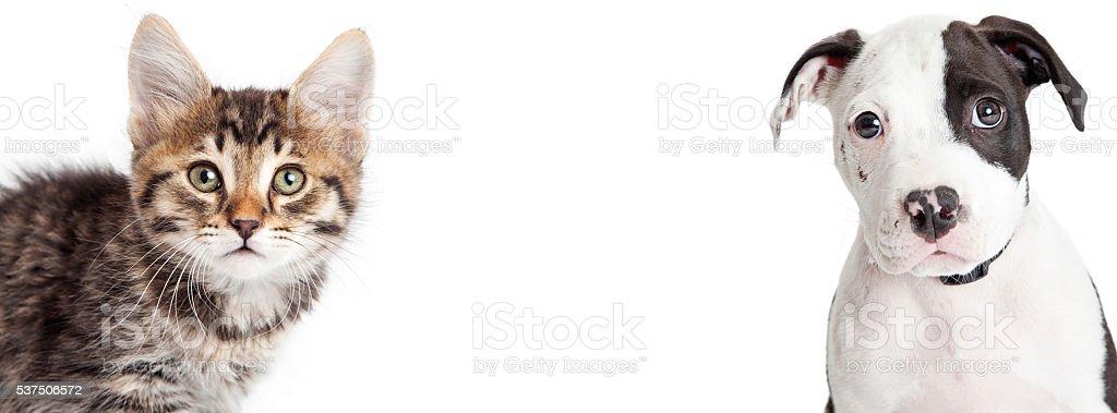 Kitten and Puppy Closeup Horizontal Banner stock photo