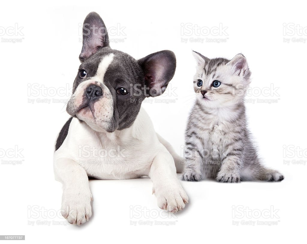 kitten and  puppy royalty-free stock photo